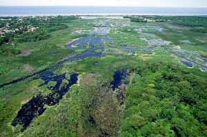 Wetlands in Cape May, New Jersey, USA. View of Fishing Creek Marsh with Miami Beach, New Jersey on the left. from U.S. Army Corps of Engineers Digital Visual Library